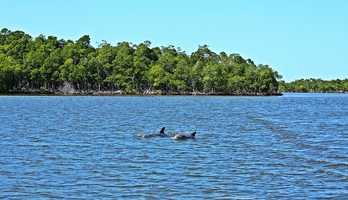 The Everglades in South Florida is arguably the most famous park in the state. Rare and endangered species like the manatee and the Florida panther inhabit the swamp. The Everglades are treasured as a World Heritage Site, International Biosphere Reserve, a Wetland of National Importance and is specially protected under the Cartagena Treaty.