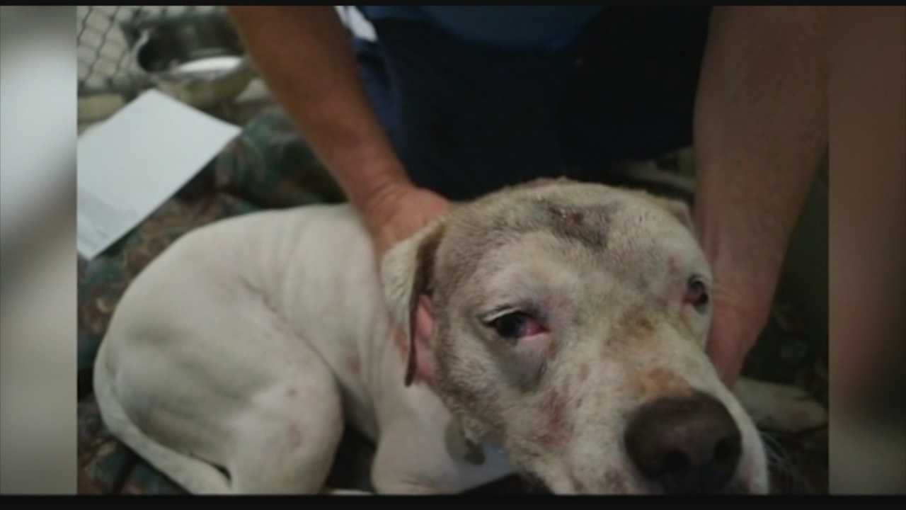 Molly, a Labrador-boxer mix, is recovering after being stabbed three times and suffering a fractured skull after being beaten with a baseball bat on Sunday.