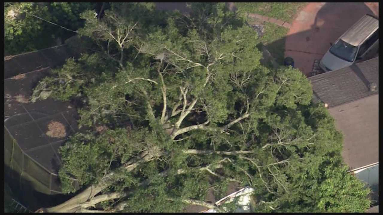There's a lot of damage to clean up, but thankfully no one was injured, at an Orange County home after a tree crashed through it on Monday.