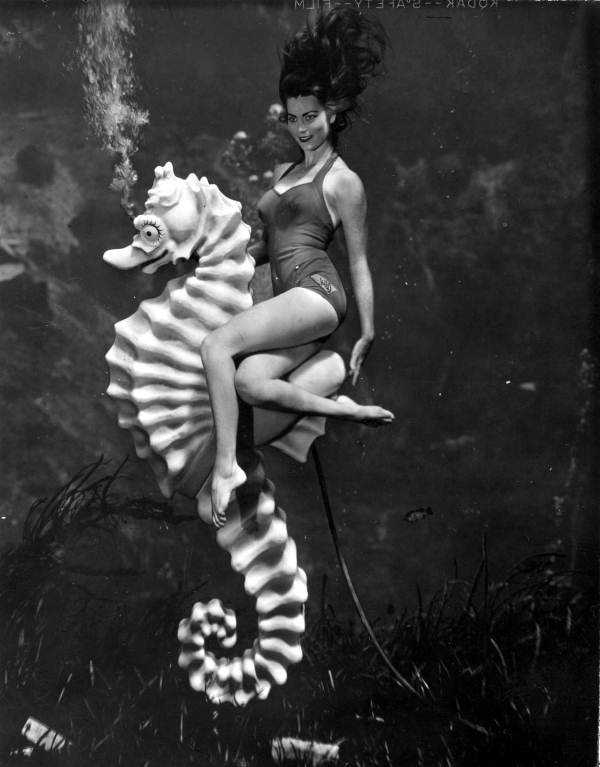 In 1959, ABC purchased Weeki Wachee and built a new 400-seat underwater theater that is still used today. This mermaid performs with Bubbles the Seahorse in 1960.