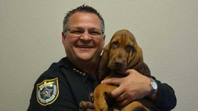 Brevard County Sheriff bloodhound.jpg