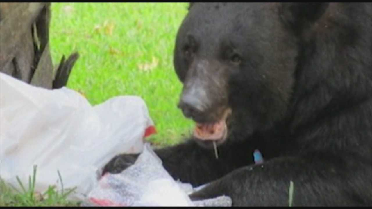 WESH 2 News Investigates: Residents not being cited for feeding bears