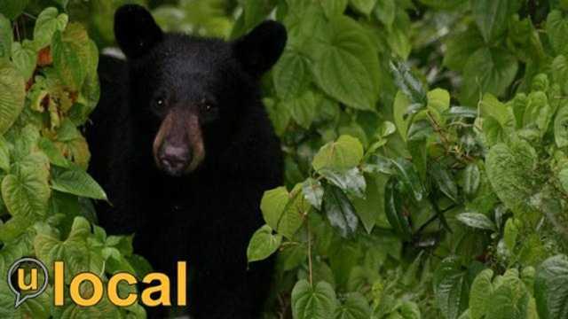 Bear u local.jpg