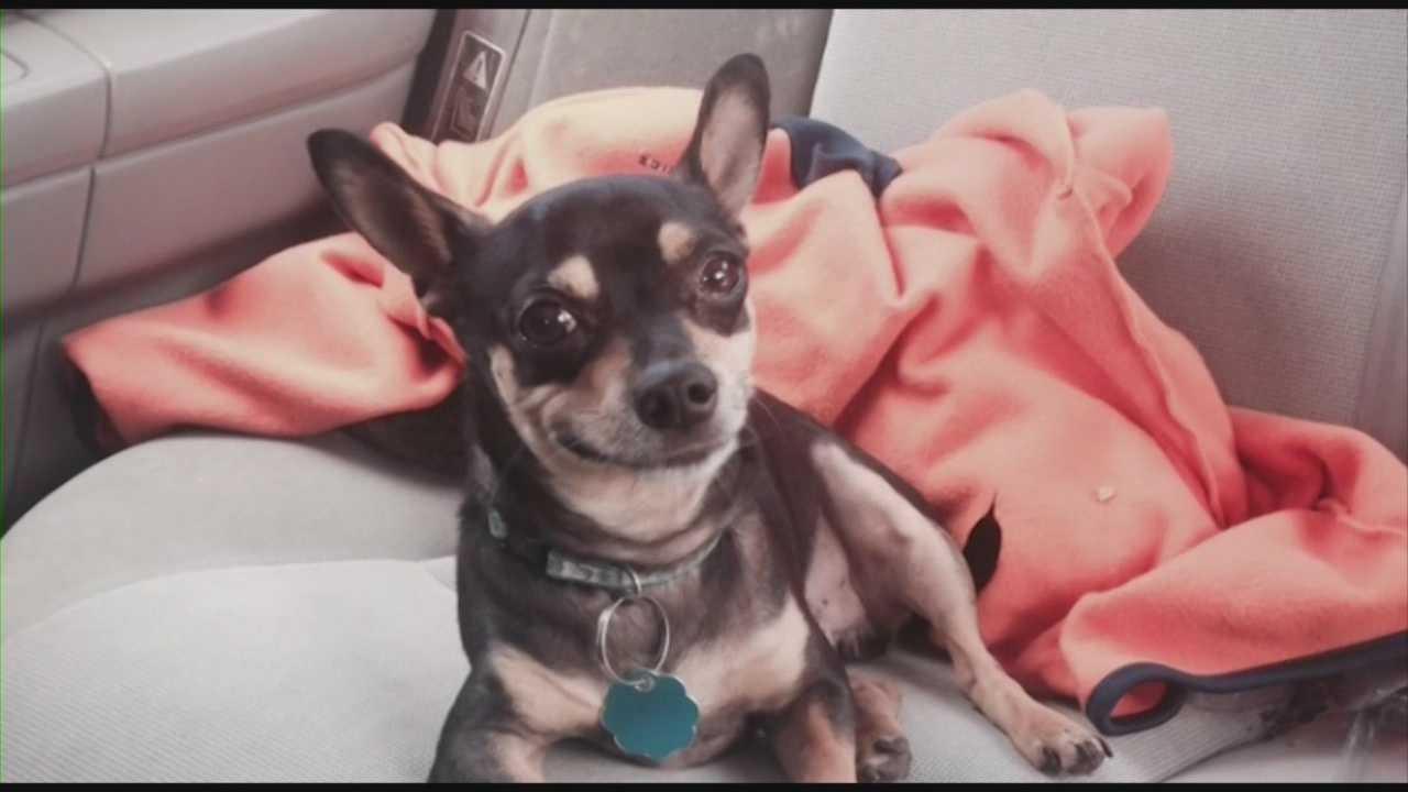 Police: Port Orange family Chihuahua mauled, killed