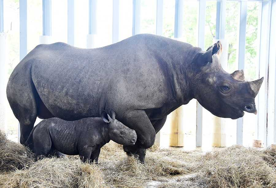 Three baby animals have been born at Zoo Miami in the past few days.