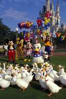 Donald Duck made his Disney debut on June 9, 1934. Flip through to see some photos of Donald over the years.