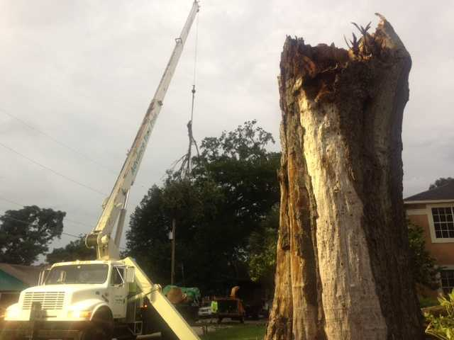 A storm took down a massive tree in the Conway Gardens area of Orlando Tuesday afternoon.