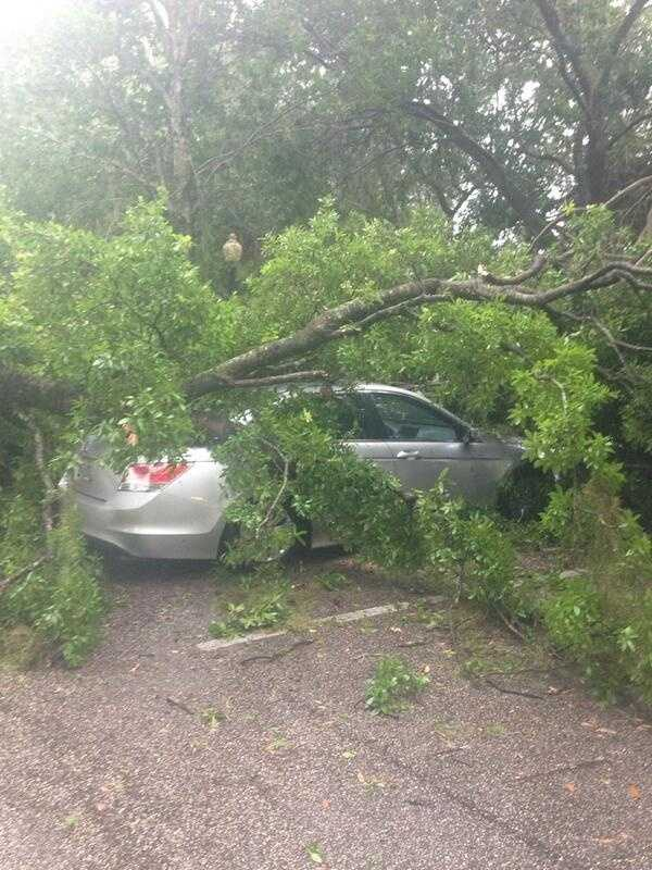 A tree fell on top of a car at Lake Lily Dr. in Maitland during Wednesday's thunderstorms.