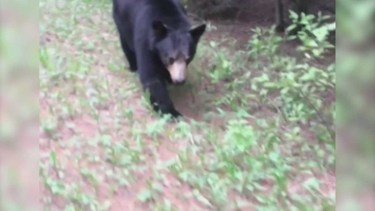 Two men out on a jog met up with a curious little black bear who wouldn't leave them alone in Alberta, Canada.