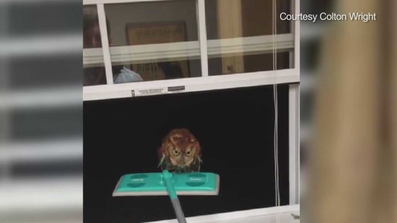 An owl got trapped inside a man's home in Texas, and he managed to capture the whole ordeal on camera.
