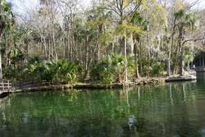 3. Wekiwa Springs State Park is the perfect spot to take your family and friends for a day out in nature. Visitors can enjoy a picnic, take a swim, rent a canoe, go on a hike or horseback ride. 1800 Wekiwa Circle, Apopka, Fla. 32712