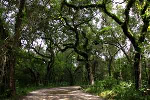 9.Withlacoochee State Forestis a favorite spot for those who enjoy long-distance backpacking, horseback riding and bird watching.15003 Broad St, Brooksville, Fla. 34601