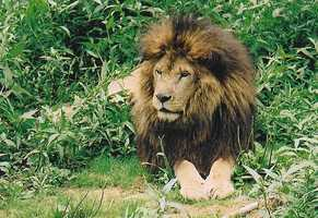7.Lions, Tigers and Bears Inc.is for the lover of exotic animals. Located in Arcadia, the mission of the organization is to give home to unwanted exotic animals and endangered species.9801 N.E. Bahia Ct., Arcadia, Fla. 34265