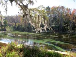 13. Ocala National Forest lies between the Ocklawaha and St. Johns Rivers. It spreads over 383,000 acres and protects the world's largest contiguous sand pine scrub forest. The forest has more than 600 lakes, rivers and springs. Four major natural springs of crystal clear water can be found at Juniper Springs, Salt Springs, Alexander Springs and Sliver Glen Springs. Visitors can enjoy year-round camping, picnicking, fishing, birding, hiking, bicycling, horseback riding and ATV riding. For those looking to swim, the springs remain at 72 degrees. Silver Springs, FL 34488