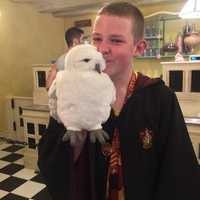 Inside Florean Fortescue's with Hedwig