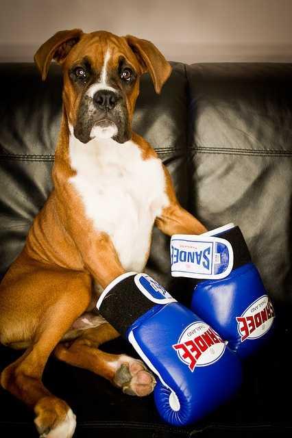 9. Boxer