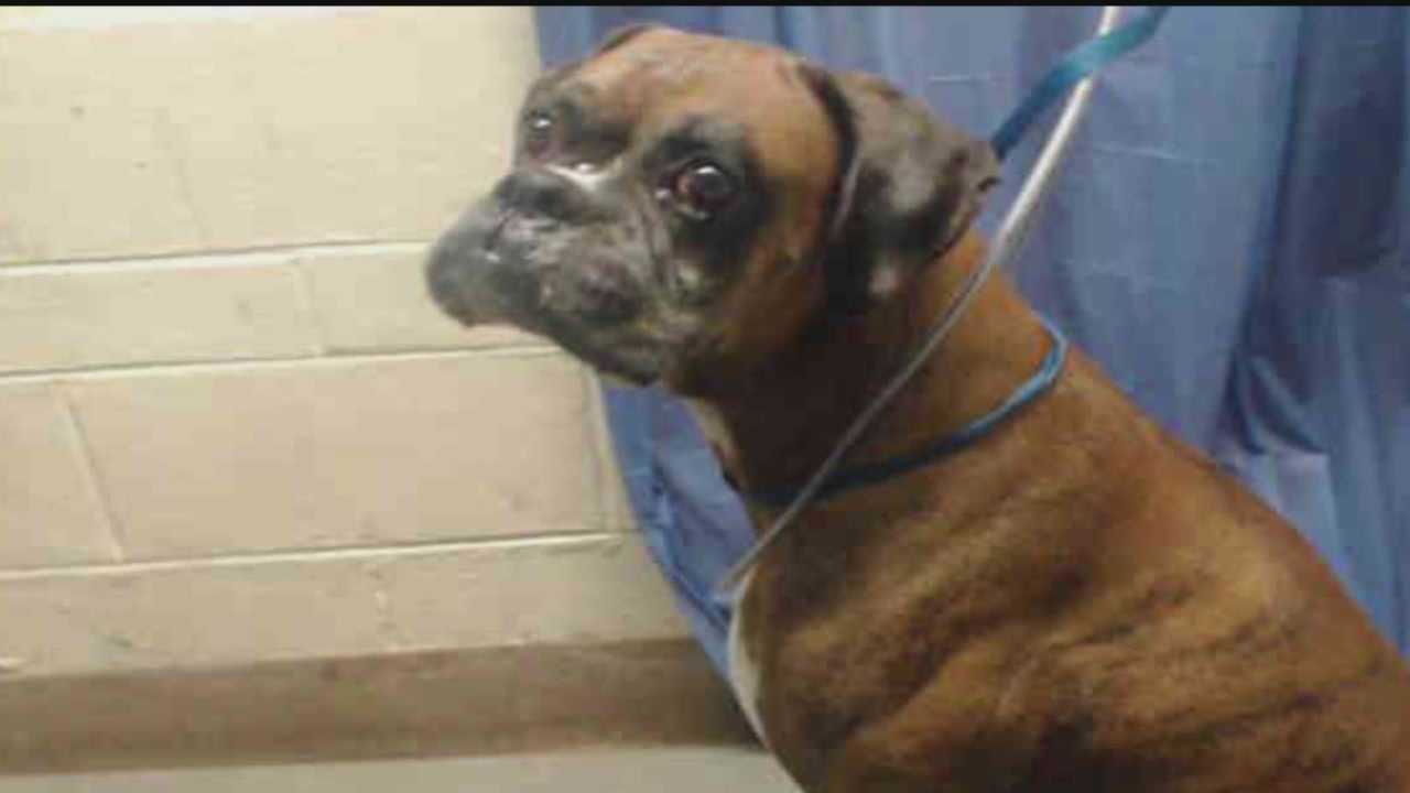The dog that bit off part of an Orlando woman's ear Monday afternoon was put down Tuesday, as Animal Control workers try to figure out why it attacked her.