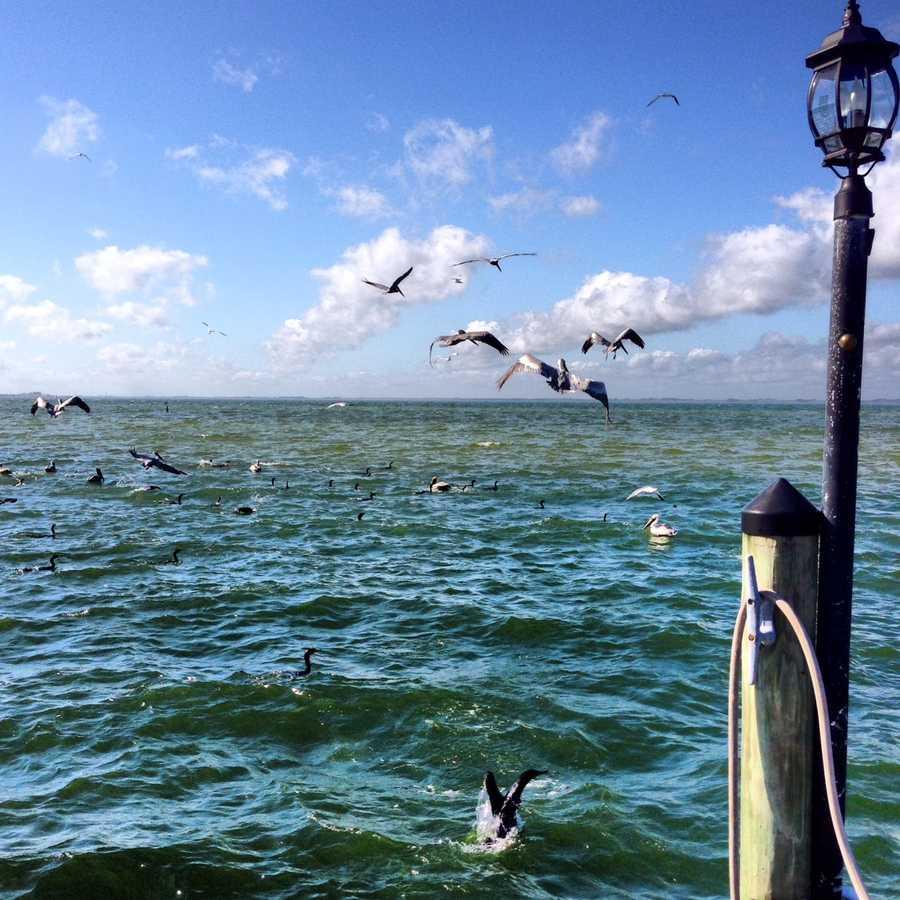 2013: Birds on the pier