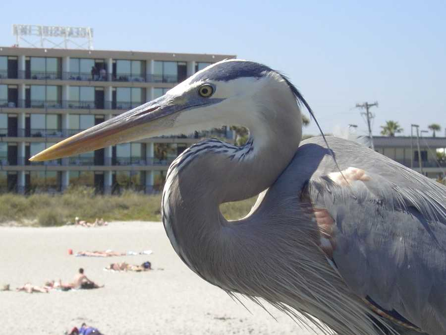 2012: Bird hanging out at the beach