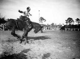 1946: Cowboy riding a wild horse in New Smyrna Beach