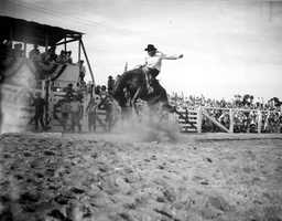 1946: Charlie Barns rides a bronc horse in New Smyrna Beach