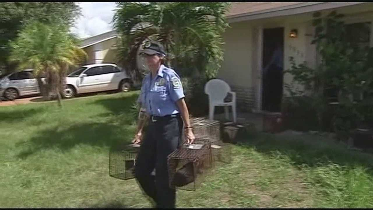 Crews responded Wednesday to a residence on Ithica Circle in Lantana where dead cats were found in freezers and another 30 cats were found inside the home.