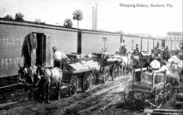 1913: View of the celery shipping in Sanford