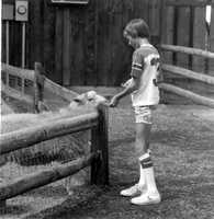 1979: Young boy feeding sheep at the Sanford Zoo