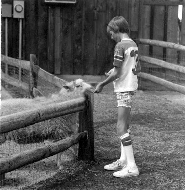 1979: Young boy feeding sheep at the Sanford Zoo