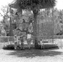 1979: View of the monkey cage in the Sanford Zoo