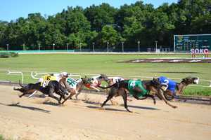2014: Dog racing at the Sanford Orlando Kennel Club.