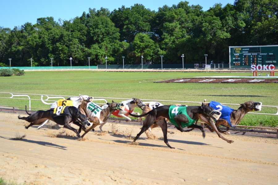 2014: Dog racing at the Sanford Orlando Kennel Club.