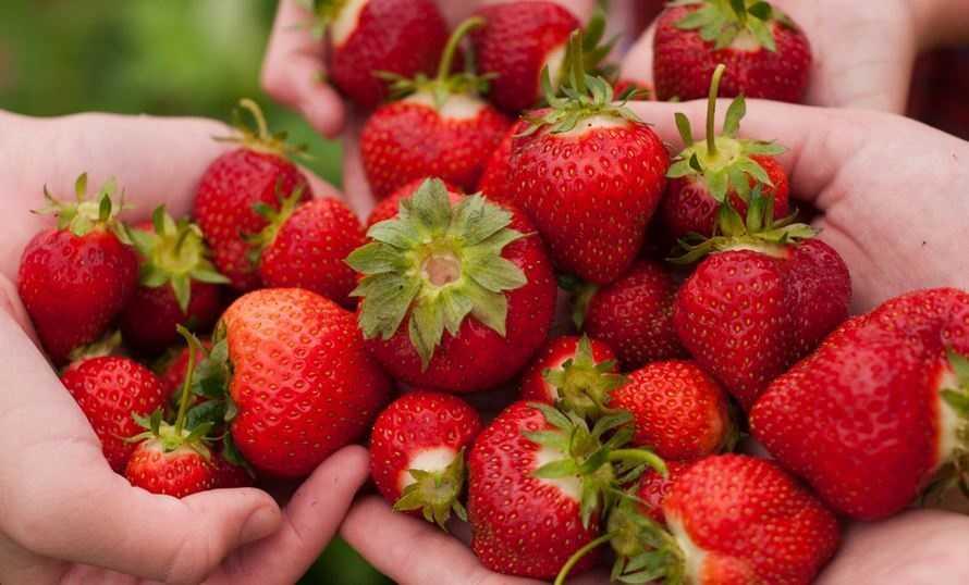 Strawberry Almond Butter FingersIngredients:5 strawberries, hulled1 teaspoon honey½ teaspoon ground cinnamon¼ cup nonfat plain Greek yogurt2 slices Arnold 100% Whole Wheat Sliced Bread1 tablespoon creamy almond butter