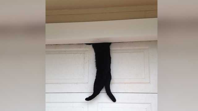 Cat Pinned By Garage Door Gets Rescued By Officer