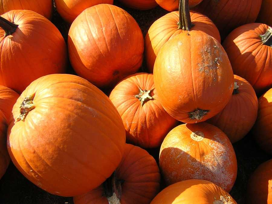 2. The Pumpkin VillageWhen:Oct. 17 - Oct. 31Where:6200 20th St. Indian River Mall, Vero Beach, FL 32966Admission: $5Activities:Pumpkin patch, tractor-pulled hay rides, face painting, inflatables, crafts, games, face painting