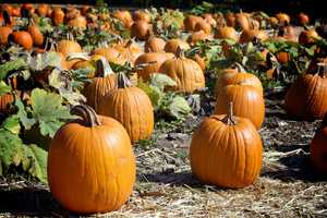 6. Sanlando Fall FestivalWhen:Oct. 26, 3 p.m. to 5 p.m.Where:Sanlando United Methodist Church, 1890 West State Road 434, Longwood, FL 32750Admission:FreeActivities:Face painting, games, bounce houses, on-site pumpkin patch