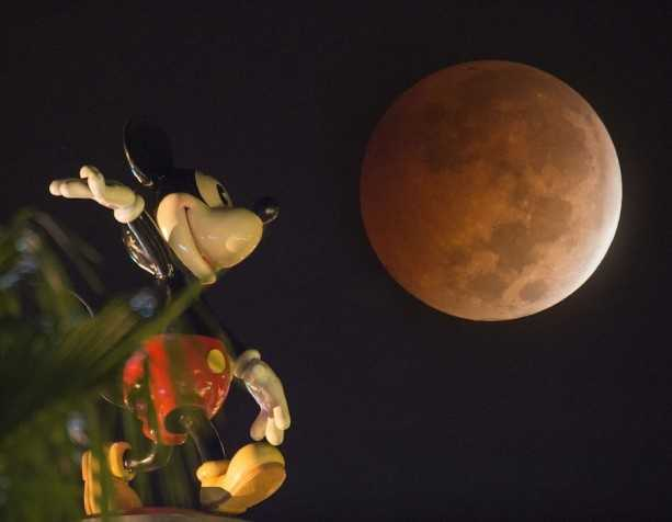 See pictures of yesterday's blood moon over Walt Disney World.