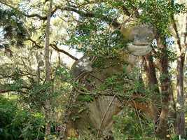 40. Sugar Mill Botanical GardensTravel the trails to a sugar mill constructed in 1832 and explore the many plant species along the way, including a 250-year-old oak. There are also sculptures of dinosaurs.Address:950 Old Sugar Mill Rd. Port Orange, FL 32119