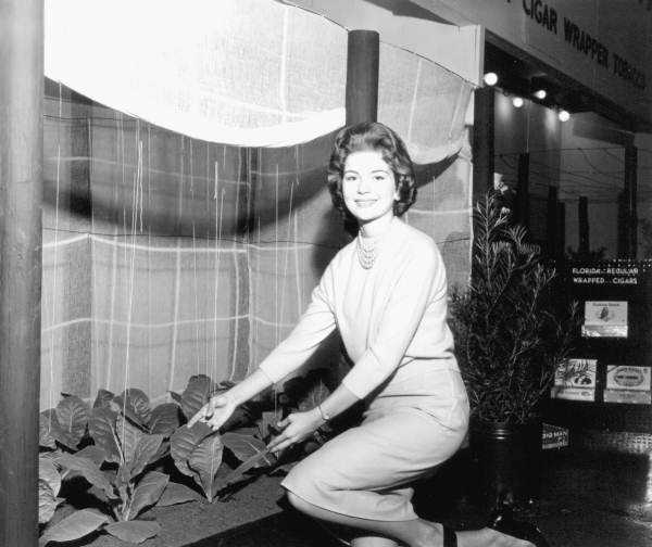 1963: The tobacco exhibit at the Florida State Fair.