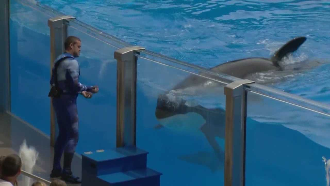 "SeaWorld has been battling negative publicity surrounding its treatment of killer whales in the wake of the documentary ""Blackfish."""