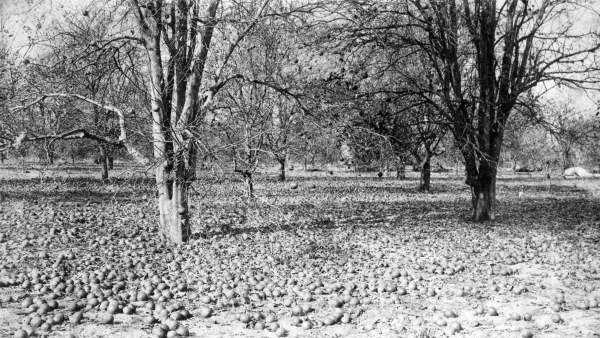 3) 19 degrees: Feb. 7, 1895