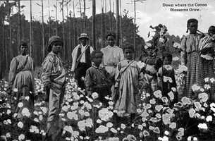 """Postcard from Florida titles """"Down where the cotton blossoms grow."""""""