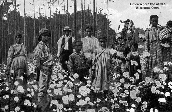 "Postcard from Florida titles ""Down where the cotton blossoms grow."""