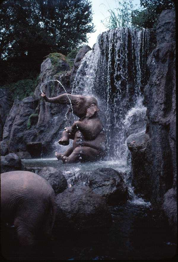 Close-up view of elephant fountain in the Jungle Cruise amusement ride in 1979
