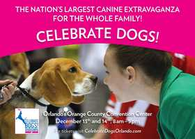 "2. Celebrate Dogs!Where: Orange County Convention CenterWhen: Saturday and Sunday, 8 a.m. to 5 p.m.Cost: Click here for ticketsFor those who's furry, four-legged friends have a seat at the dining room table, or at least close to it, this is an event that will warm your heart. This two-day event will feature more dogs than you can count and activities for everyone present to enjoy.Events include: - Celebrate Dogs' first ever Diving Dogs competition, where canine athletes will show off their extreme water diving skills in both distance and height.- Meet and play with more than 140 different dog breeds.- See exciting demos throughout the day, including dancing dogs and owners demonstrating buzzed-about ""Freestyle Canine Dancing Dogs"" and Police K-9s in action.- Watch extreme grooming up close and personal as Poodles get transformed into lions, zebras and more at the brand new Creative Styling Challenge.For more information on the event, head to celebratedogsorlando.com."