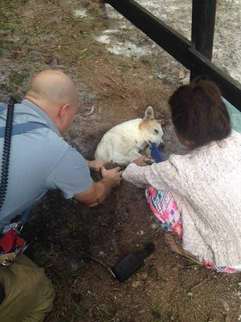 Firefighters rescued a dog from a possible sinkhole in Geneva, according to the Seminole County Fire Department.