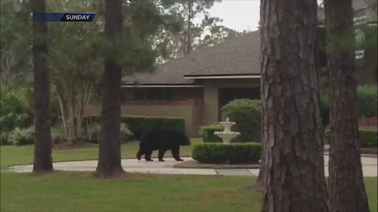 It has been months since Seminole County kicked off a voluntary program where residents can discourage bears with locking trash cans.