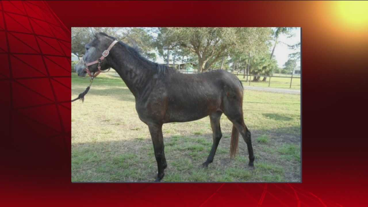 Three horses are rescued in Brevard County after a malnourished horse dies, deputies say.