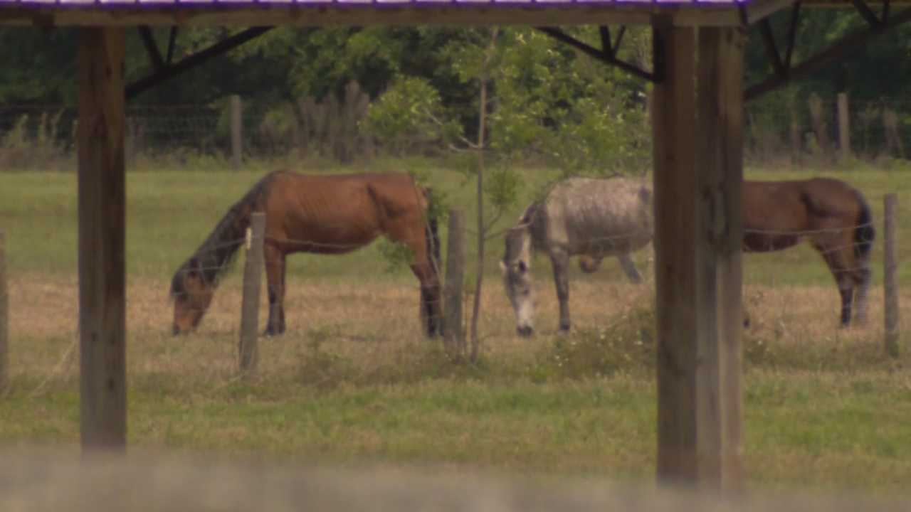 Ten horses reported as neglected in Marion County have been seized by animal services.