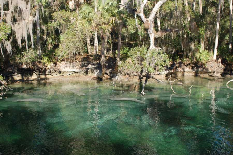 2. Discover WekivaWhen: Saturday 9 a.m. - 3 p.m.Where: Katie's Landing, Wekiva Park Dr., Sandord, FL 32771Cost: FreeDiscover Wekiva will feature free events for all ages, including canoe trips, guided hikes, children's crafts and activities, live animals and more. Food will be available on site for purchase.